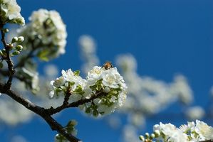 Propolis & Infections