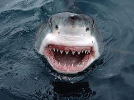 Comment aider une victime Shark Attack
